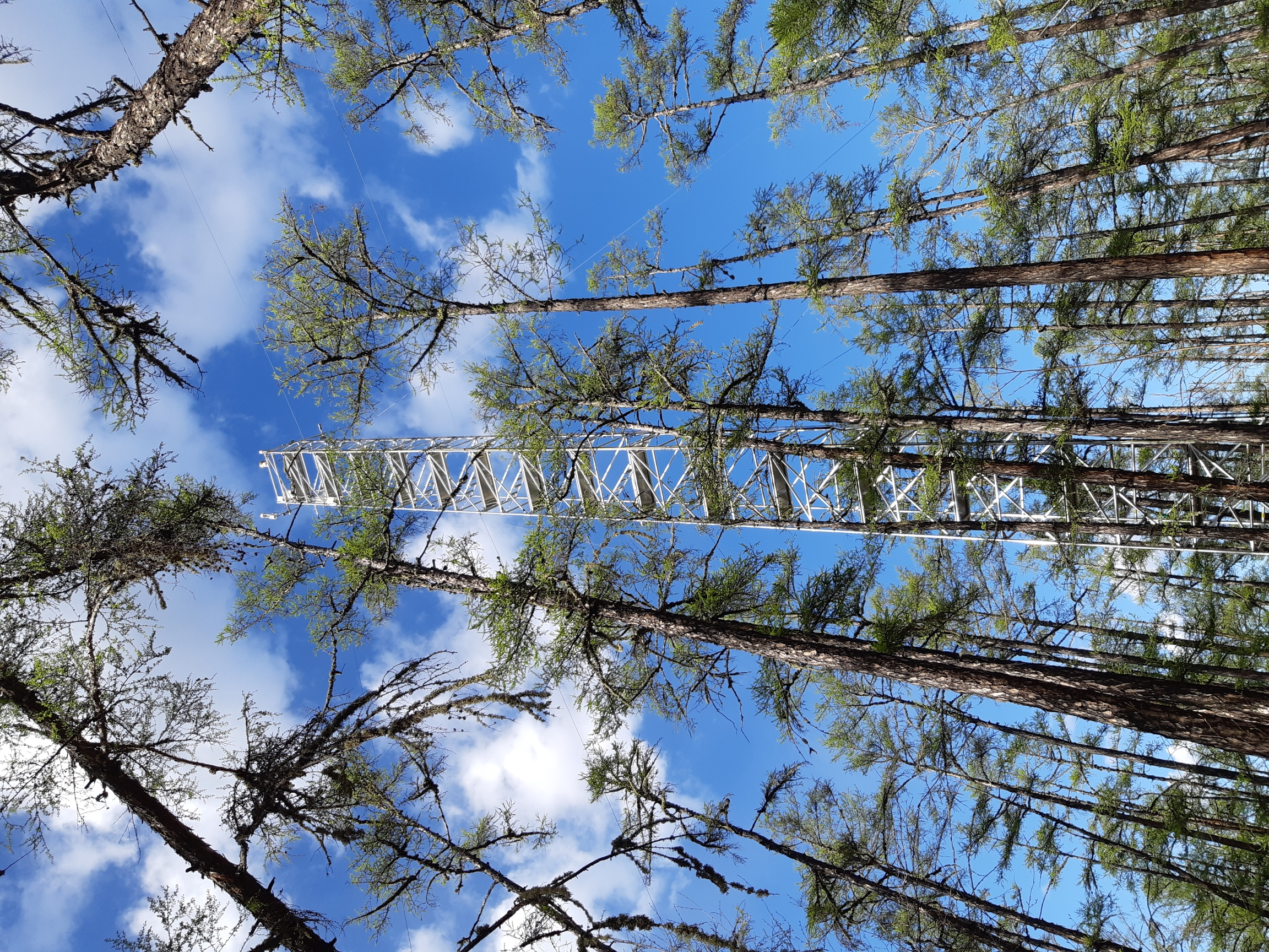 Weather observation tower established in a Japanese larch forest, which is widely spread across Eastern Siberia
