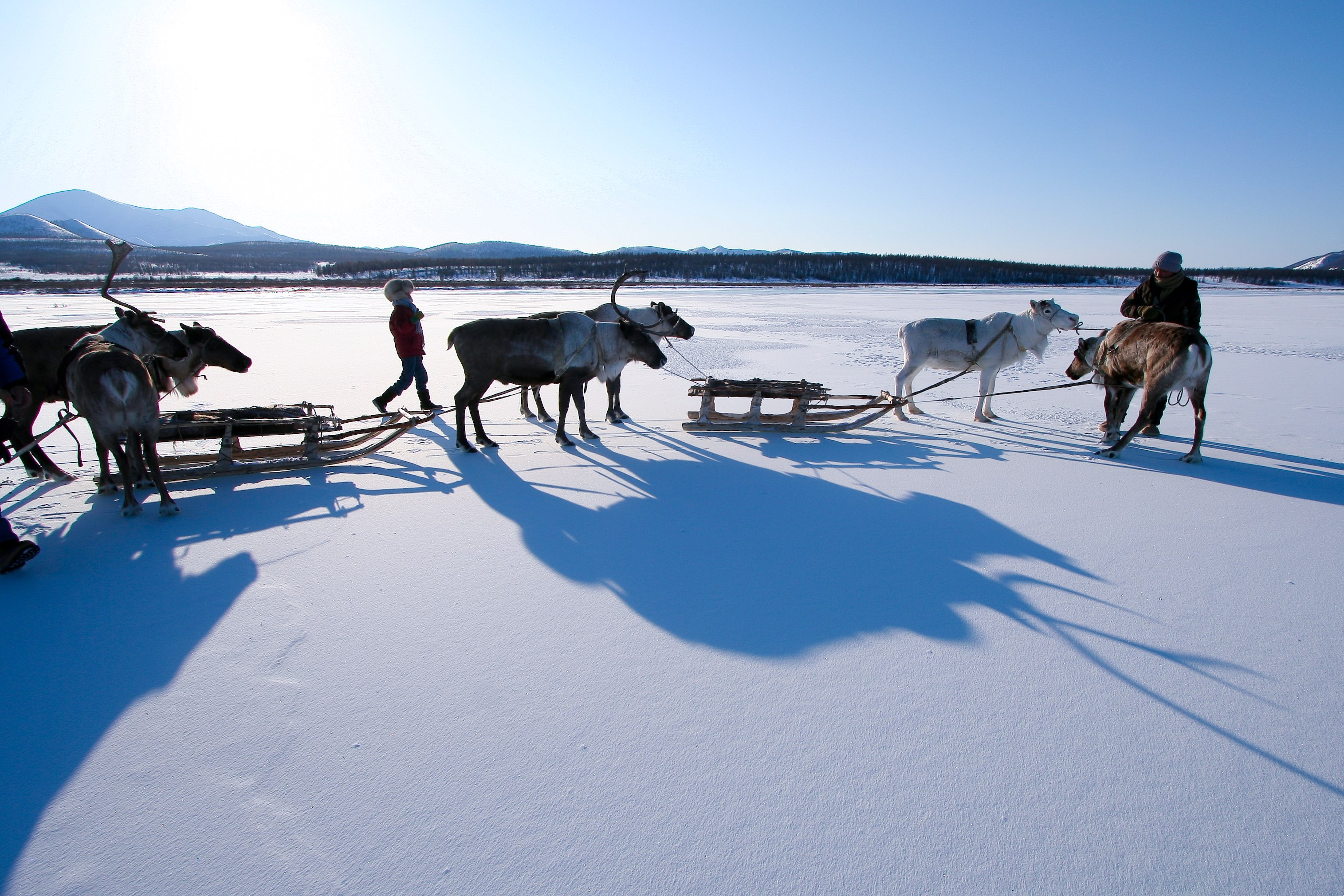 A brother and sister travelling by reindeer sled