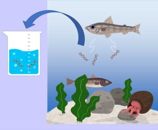 海洋を対象とした環境DNA分析のイメージ