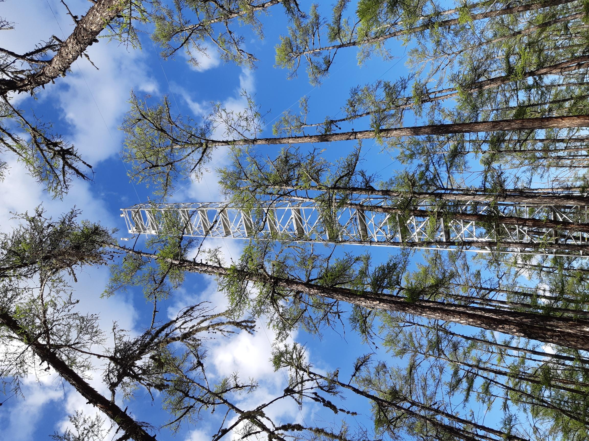 東シベリアに広く分布するカラマツの森林に設置された気象観測タワー