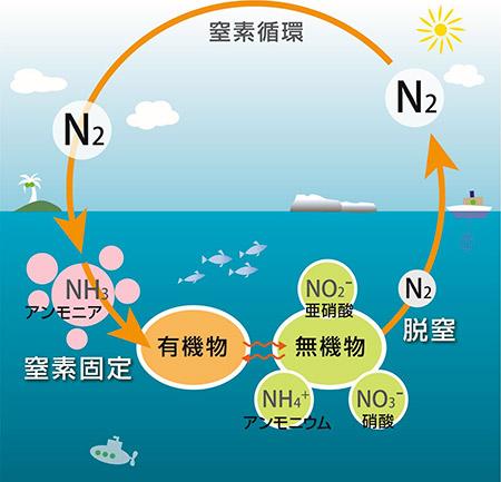 南極海海氷域における窒素固定の発見 −窒素固定が全球プロセスである ...